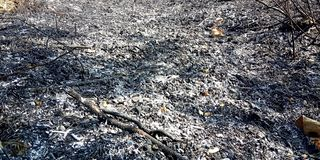 叶子被烧 库存照片