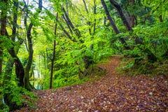 叶子被盖的走道在一个森林在秋天Plitvice停放克罗地亚 免版税库存照片