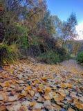 叶子被盖的足迹 图库摄影