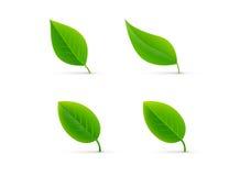 叶子被隔绝的绿色集合传染媒介例证 免版税图库摄影
