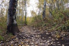 叶子被骚扰的秋天足迹 免版税库存照片