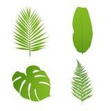 叶子设置了热带 棕榈,香蕉,蕨, monstera 免版税库存图片