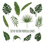叶子设置了热带 免版税库存照片