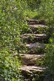 叶子跨步石头 图库摄影