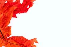 叶子边界 库存图片