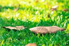叶子迷离背景在泰国的公园 免版税库存图片