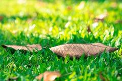 叶子迷离背景在泰国的公园 库存照片