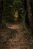 叶子通过密集的森林密林盖了轨道道路 概念性 免版税库存图片