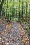 叶子通过秋天森林盖了在小山下的道路 库存照片