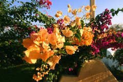 叶子醒目的黄色 图库摄影