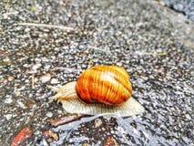 叶子雨蜗牛包围 免版税图库摄影