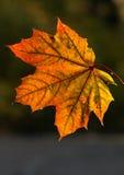 叶子雨 库存图片