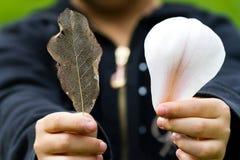叶子静脉和花瓣 免版税库存照片