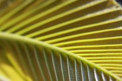 叶子静脉纹理  图库摄影