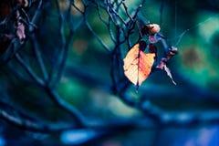 叶子颜色变动,秋叶 免版税库存图片