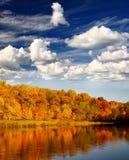 叶子风景 库存照片