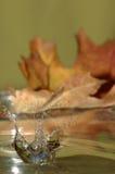 叶子飞溅 图库摄影