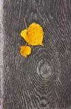 叶子黄色 库存图片