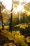叶子黄色 库存照片