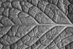 叶子黑白照片特写镜头 免版税库存照片