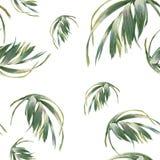 叶子,在白色背景的无缝的样式的水彩例证 图库摄影
