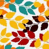 叶子,无缝的模式 库存照片