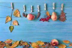 叶子,梨,苹果,在秋天的橡子在木背景 库存照片