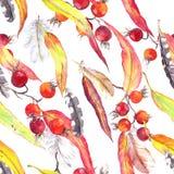 叶子,羽毛,莓果 无缝的boho样式 葡萄酒水彩 免版税库存照片