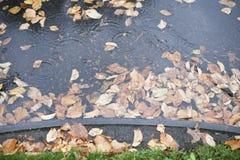 叶子,水下 图库摄影