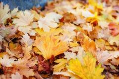 叶子以各种各样的秋季颜色 结合被生成的另外风险秋叶hdr图象三 免版税库存图片