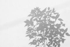 叶子阴影抽象背景在墙壁上的 库存照片