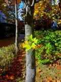 叶子从树干增长 免版税库存图片