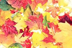 叶子-秋天叶子背景纹理 库存图片