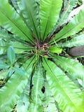 叶子绿色树自然仿造美好的背景 免版税库存图片