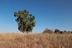 叶子绿色结构树 库存照片