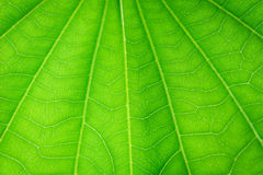 叶子细节  图库摄影