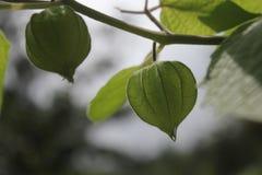 叶子细节 库存照片