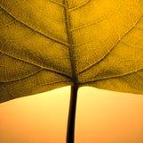 叶子细节 库存图片