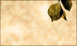 叶子 免版税库存照片