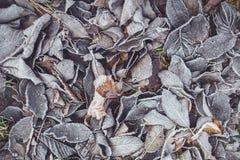 冻结叶子 免版税库存照片