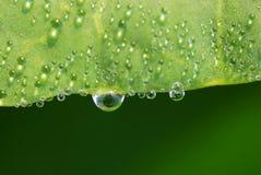 叶子waterdrops 图库摄影