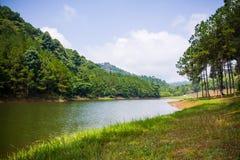 绿叶森林和湖美好的自然场面  免版税图库摄影