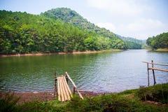 绿叶森林和湖美好的自然场面  免版税库存照片