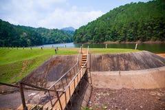 绿叶森林和湖美好的自然场面  库存照片