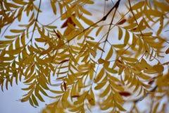叶茂盛墙纸 库存图片