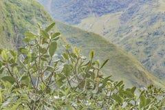 叶茂盛山风景在Banos厄瓜多尔 库存图片