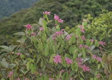 叶茂盛山风景在Banos厄瓜多尔 免版税库存照片