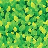 叶茂盛无缝的背景1 库存图片