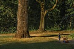 叶茂盛树和孩子有业余时间在公园在日落在蒂尔特 库存照片