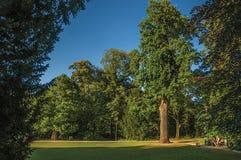 叶茂盛树和孩子有业余时间在公园在日落在蒂尔特 免版税图库摄影